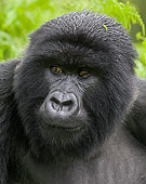 PRM 01 WF0002 01