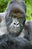 PRM 01 WF0005 01