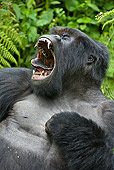 PRM 01 WF0009 01