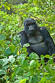 PRM 01 WF0010 01