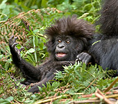 PRM 01 WF0014 01