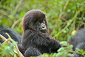 PRM 01 WF0016 01
