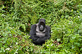 PRM 01 WF0017 01