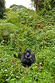 PRM 01 WF0018 01