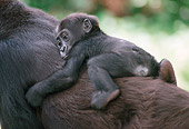 PRM 01 GR0001 01