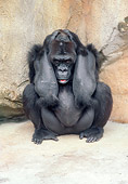 PRM 01 GR0004 01