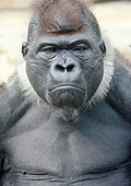 PRM 01 GR0005 01
