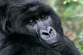PRM 01 KH0001 01
