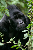 PRM 01 KH0002 01