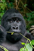 PRM 01 KH0003 01