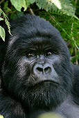 PRM 01 KH0005 01