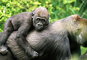PRM 01 RD0018 01