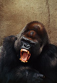 PRM 01 RK0052 20