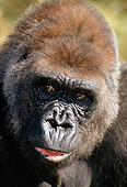 PRM 01 TK0001 01