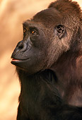 PRM 01 TL0001 01
