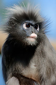 PRM 02 AC0069 01