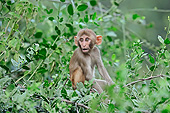 PRM 02 AC0074 01