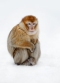 PRM 02 AC0078 01