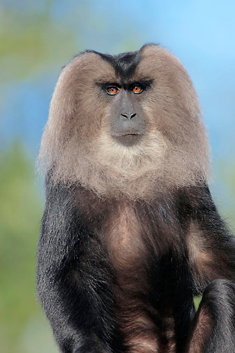 PRM 02 AC0082 01