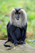 PRM 02 AC0095 01