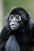 PRM 02 AC0098 01
