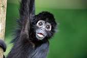 PRM 02 AC0099 01