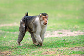 PRM 02 AC0102 01
