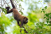 PRM 02 AC0111 01