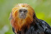PRM 02 AC0112 01