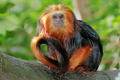 PRM 02 AC0113 01