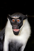 PRM 02 GL0005 01