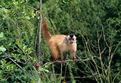 PRM 02 GL0010 01