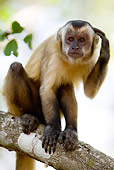 PRM 02 MC0001 01