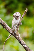 PRM 02 MC0005 01