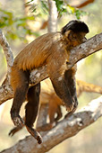 PRM 02 MC0014 01