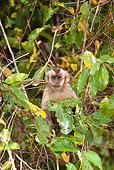 PRM 02 MC0015 01