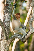 PRM 02 MC0016 01
