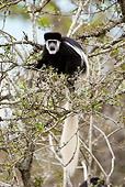 PRM 02 MC0018 01
