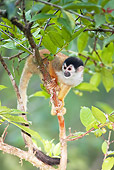 PRM 02 MC0019 01