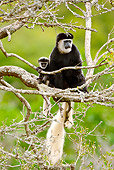 PRM 02 MC0020 01