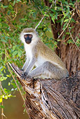 PRM 02 MC0021 01
