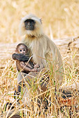 PRM 02 MC0034 01
