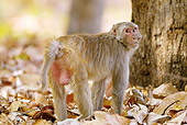 PRM 02 MC0037 01