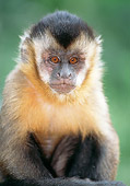 PRM 02 MH0025 01