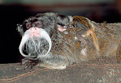 PRM 02 MH0026 01