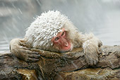 PRM 02 WF0011 01