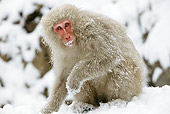 PRM 02 WF0013 01