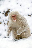 PRM 02 WF0014 01