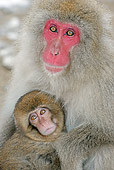 PRM 02 WF0017 01