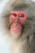 PRM 02 KH0004 01